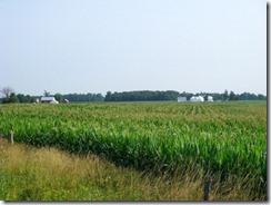 Corn-Rows
