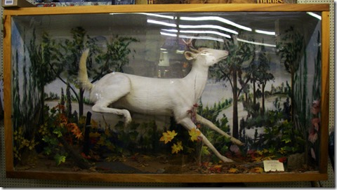 Bait-Shop-Albino-Deer
